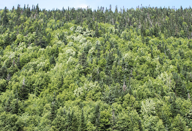 how to become a registered professional forester